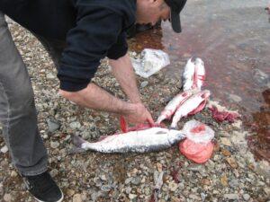 На Камчатке задержан браконьер с икрой на 6 млн рублей