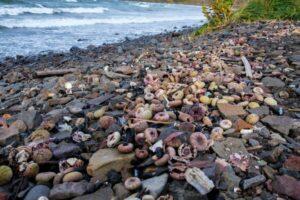 Экологическая катастрофа на Камчатке