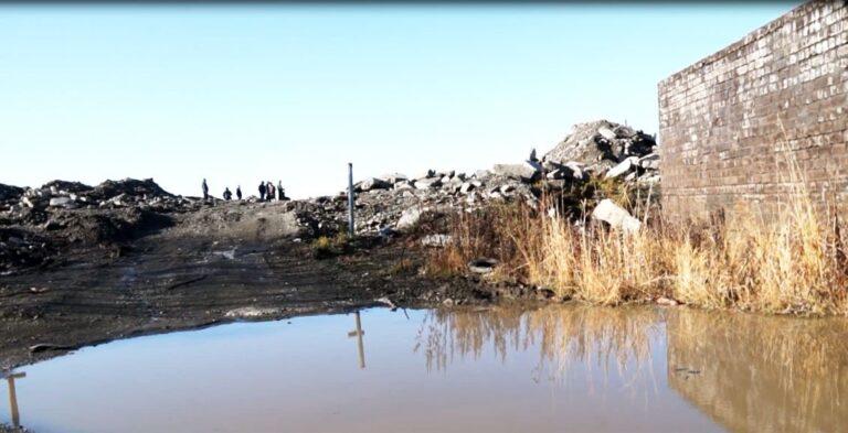 Отлов бродячих животных инициировали после гибели ребенка на Камчатке